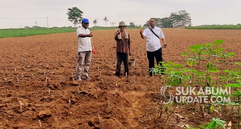 Dorong Ketersediaan Pangan, FKDB Kerjasama dengan Petani Singkong di Lampung